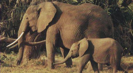 Самые интересные представители класса млекопитающие