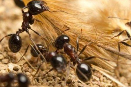 Муравьи — общественные насекомые, виды