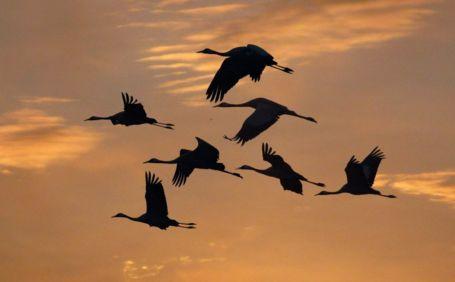 Куда улетают птицы, почему возвращаются?