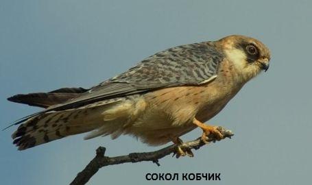 Хищные птицы нашей страны